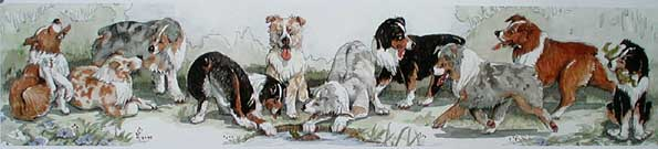 mini australian shepherds